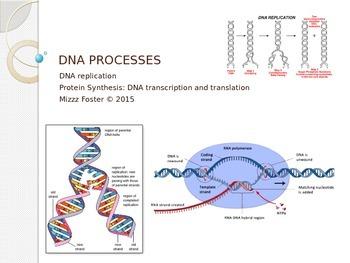 DNA Processes: DNA Replication, DNA Transcription, DNA Tra