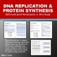 DNA Processes: DNA Replication and Protein Synthesis Works