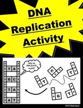 DNA Replication Activity