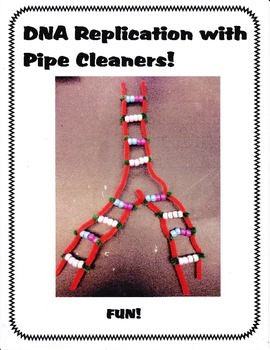 DNA Replication Simulation using Pipe Cleaners