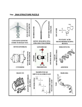 DNA Structure: 9 Square Puzzle Card Sort