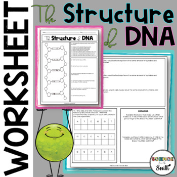 DNA Structure Worksheet Printable Use for Review or Assessment