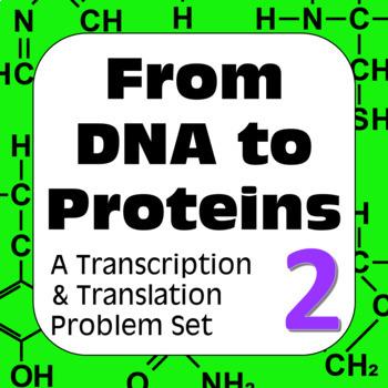 Genetics DNA Transcription & Translation: Construct a Poly
