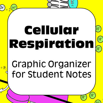 Cellular Respiration: Student Graphical Note Organizer