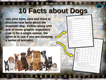DOGS (DOMESTIC) - visually engaging PPT w facts, video lin