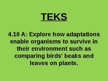 "Daily Quick Checks, ""Adaptations of Plants"" (Science TEKS 4.10A)"