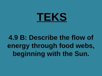 "Daily Quick Checks, ""Food Webs"" (Science TEKS 4.9B)"