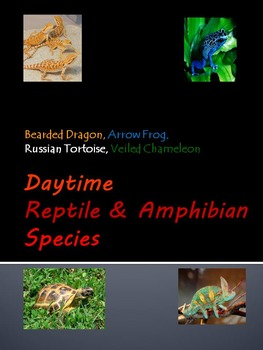 Daytime Reptiles & Amphibians Species