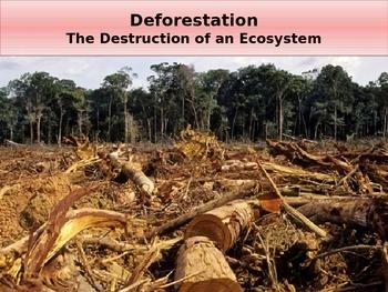 Deforestation - The Destruction of an Ecosystem