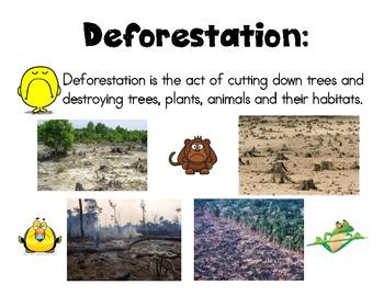 Deforestation Vocabulary Card
