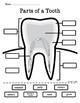 Dental Health Tooth Diagram Freebie