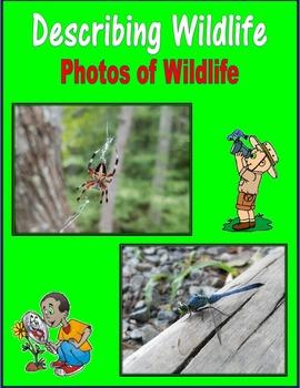 Describing Wildlife (Photos of Wildlife)