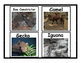 Desert Animal Flashcards