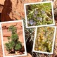 Desert Plants - Photographs for Commercial and Personal Use