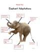 Desert The Elephant