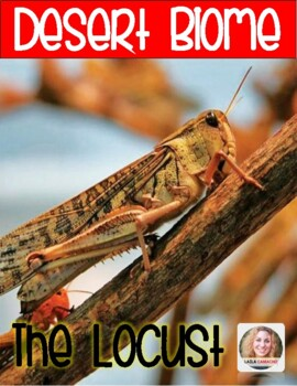 Desert The Locust