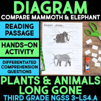 Diagram Woolly Mammoth & Elephant Structures - Plants & An