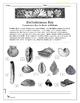 Dichotomous Key: Classification Key for Shells of Mollusks