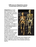 Differences in Adaptations among Neanderthals and Homo Sapiens