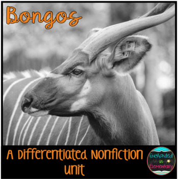 Differentiated Nonfiction Unit: Bongos
