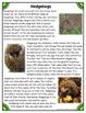 Differentiated Nonfiction Unit: Hedgehogs