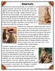 Differentiated Nonfiction Unit: Meerkats