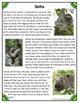 Differentiated Nonfiction Unit: Sloths
