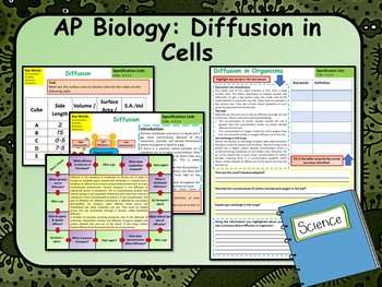 Diffusion in Cells Lesson