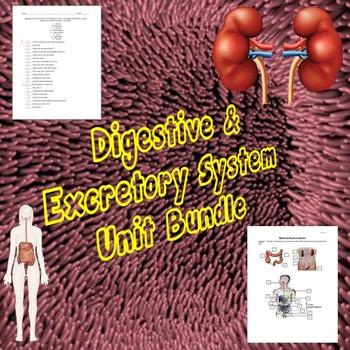 Digestive/Excretory System Unit