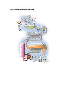 Digestive System Analogy