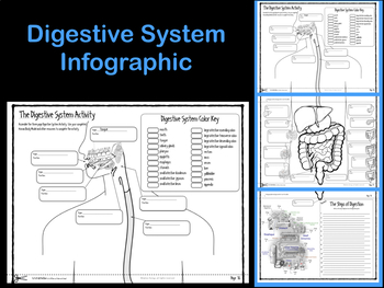 Digestive System Infographic