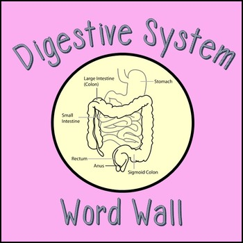 Digestive System Word Wall Cards & student vocabulary handout
