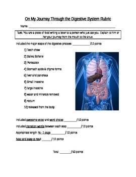 Digestive System Writing Activity