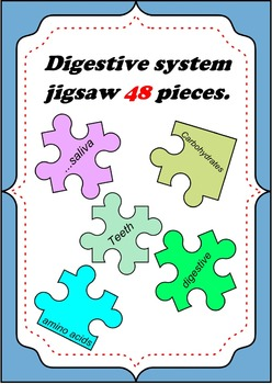 Digestive system jigsaw puzzle game review