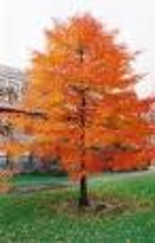 Interactive Attendance Sheet- Fall/Autumn