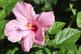 Digital Photos of US Flowers Plants