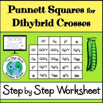 Dihybrid Crosses (Punnett Squares)