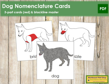Dog Nomenclature Cards (Red)