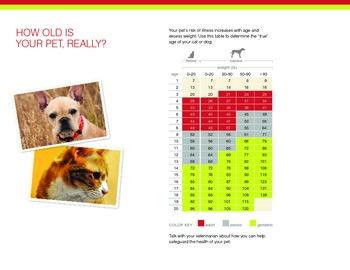 Dog years conversion chart