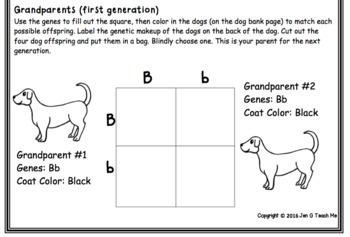 Doggy Genetics - Hereditary Genetics Activity