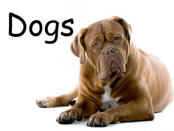 """Dogs Nonfiction PowerPoint """"Book"""" for First or Second Grade"""
