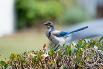 Dollar Stock Photo 161 Blue Jay