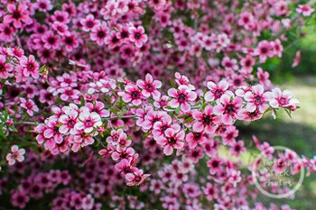 Dollar Stock Photo 234 Pink Flowers Wide
