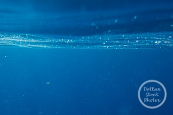 Dollar Stock Photo 247 Ocean Underwater