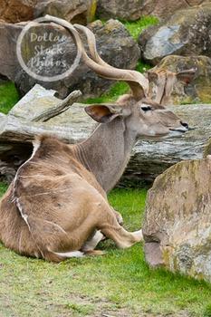 Dollar Stock Photo 264 Antelope