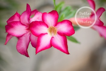 Dollar Stock Photo 297 Tropical Flowers