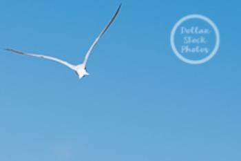 Dollar Stock Photo 40 Bird Flying Blue Sky
