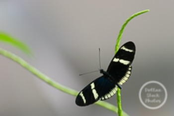 Dollar Stock Photo 62 Black and Yellow Butterfly