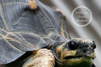 Dollar Stock Photo 65 Turtle with Attitude