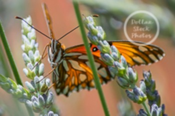 Dollar Stock Photo 97 Butterfly Close Up